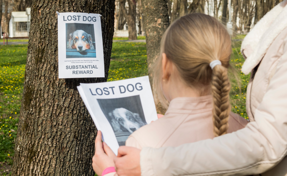Pet insurance To Help Find Your Lost or Stolen Pet