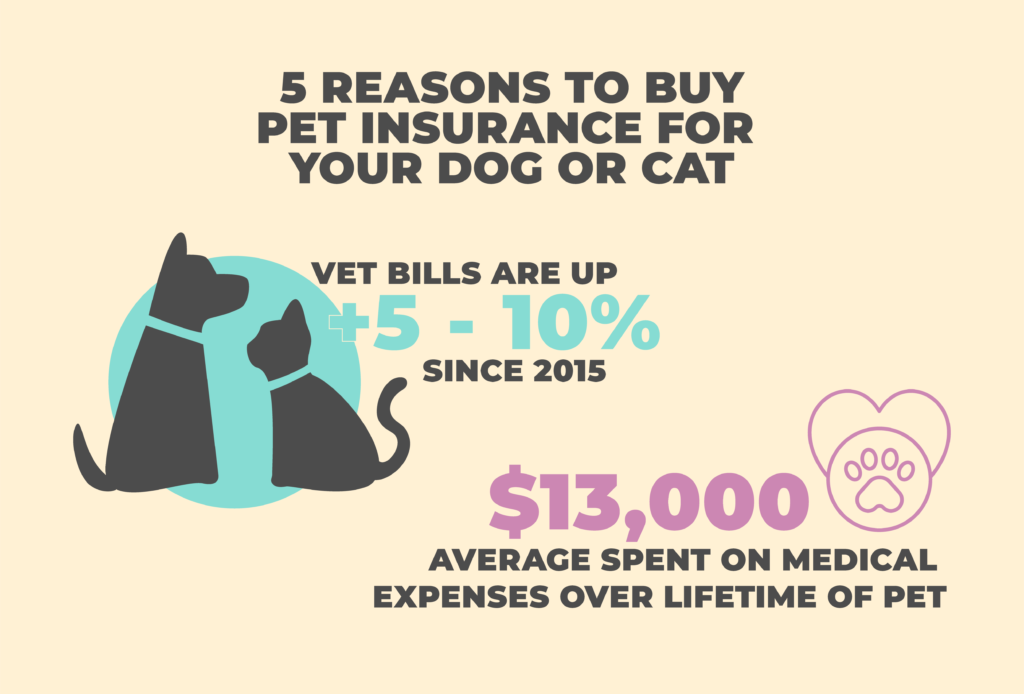 Reasons to Buy Pet Insurance for Your Dog or Cat